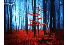 Mistige herfst bos