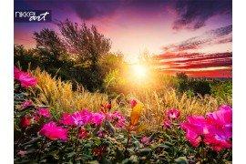 Zonneschijn en bloemen