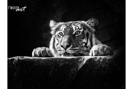 Portret van tijger
