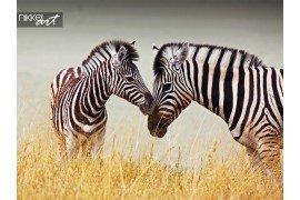 Portret van wild gemeenschappelijk zebra