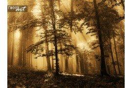 Zonsopgang op de rand van een bos in het najaar met mist