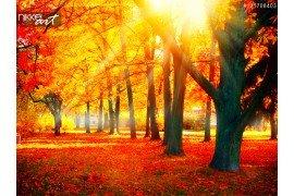 Herfst Val natuur scène