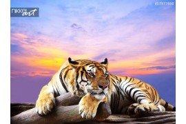 Tijger zoek iets op de rots met mooie hemel bij zonsondergang