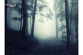Pad via een donker mysterieuze bos met mist
