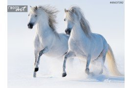 Twee galopperend sneeuwwitte paarden
