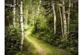 Wandelpad in groene zomer bos
