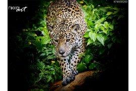 Jaguar wandelen in het bos