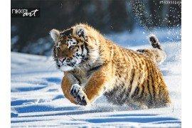 Siberische tijger op sneeuw