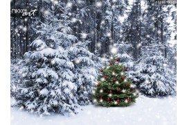 Kerstboom in besneeuwde bossen