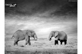 Twee olifanten in het wild - national park Kenia