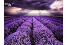 Keuken foto achterwand Lavendel