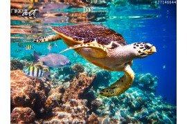 Foto achterwand Koraalriffen