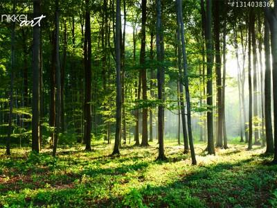 Mooie ochtend met zonnestralen in het bos