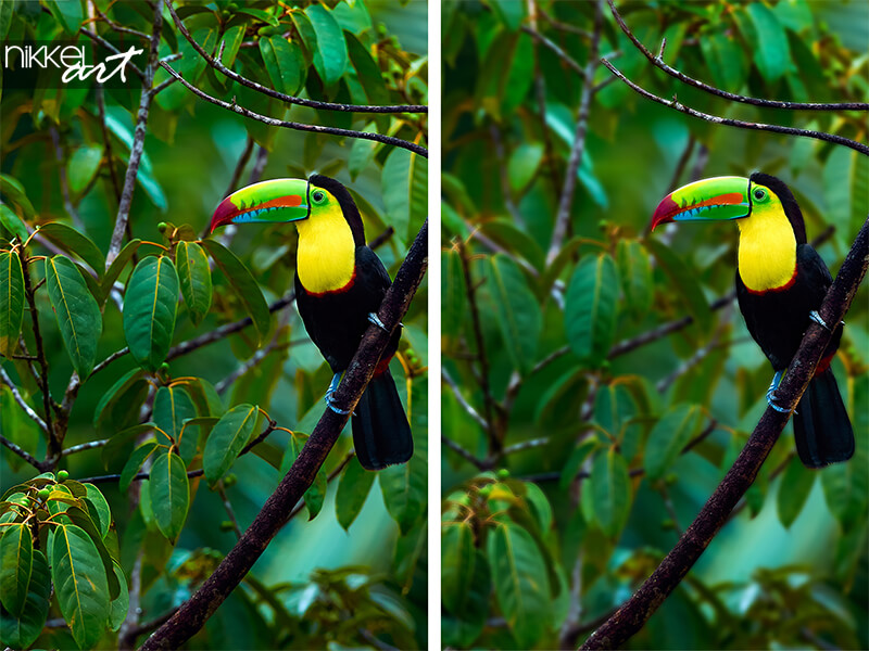 Colorful bird on branch in the rainforest