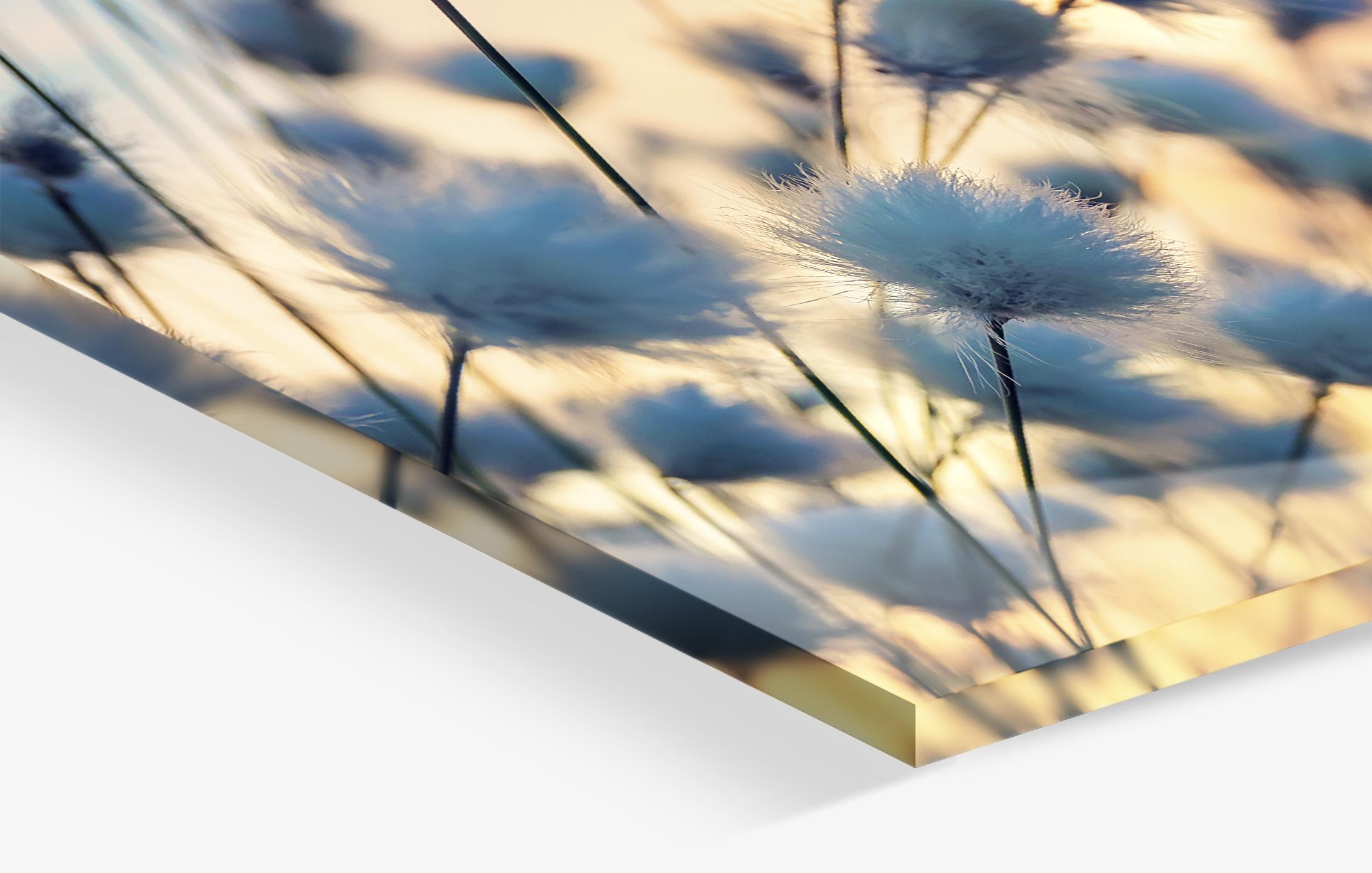 Plexiglas 1