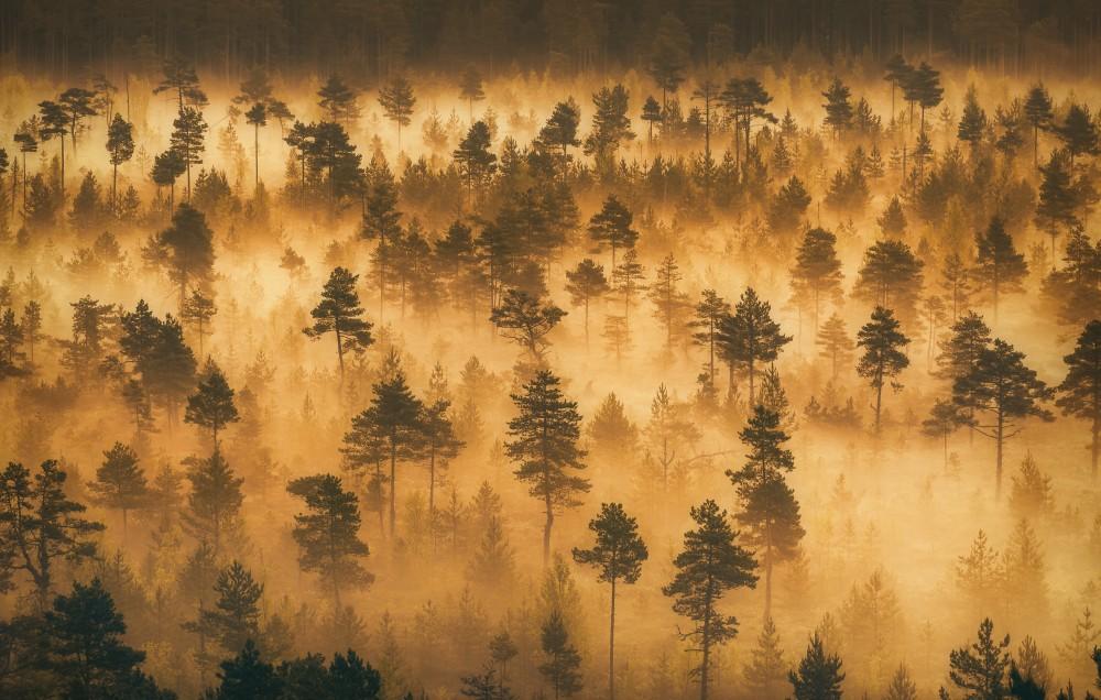 Bos in mist