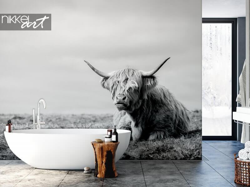 In de kijker: Schotse hooglander op fotobehang