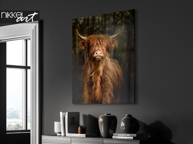Schotse hooglanders als eye-catcher in je interieur