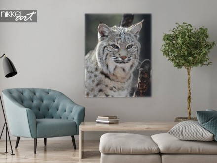Foto op Canvas Canadese Lynx