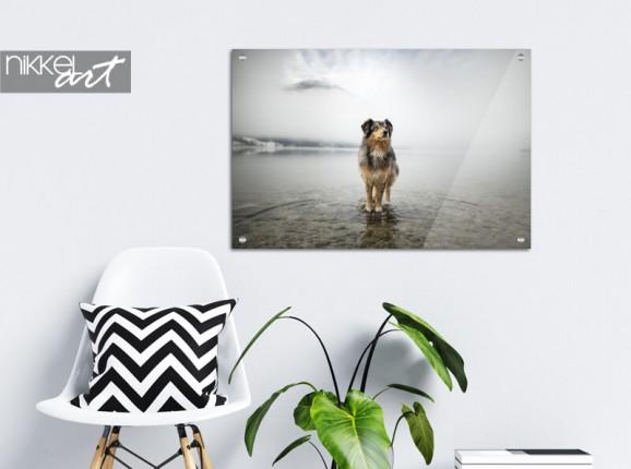 Foto van je hond op glas