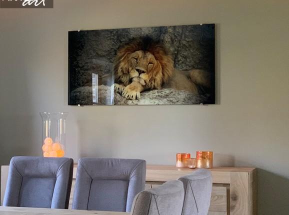 Foto op plexiglas leeuw