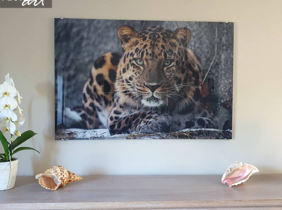 Foto op plexiglas luipaard