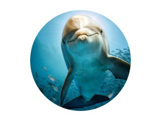 dolphin underwater on reef close coming to you