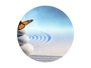 Butterfly On Spa Massage Stones In Zen Garden